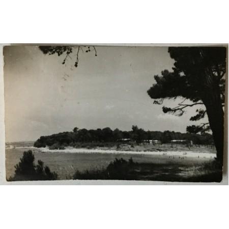 Medulin: stara razglednica pogled na plažu i borovu šumu