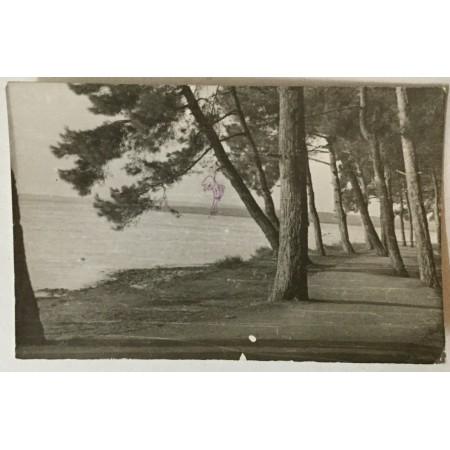 Medulin: stara razglednica borovi i obala s crvenom kemijskom nacrtanim vješalima
