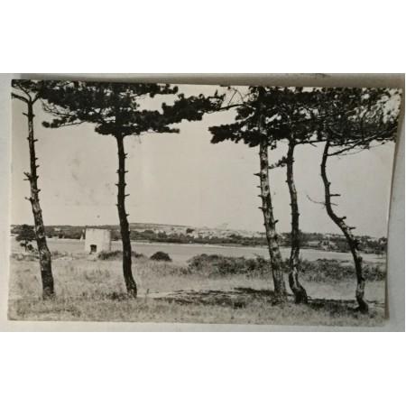 Medulin: stara razglednica borovi i panorama