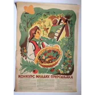 ZAŠTITA PRIRODE  ,   STARI PLAKAT , 1950'e , 70  x 50  cm.